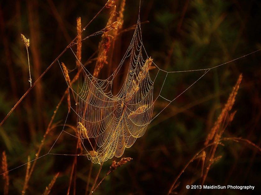 Morning's web
