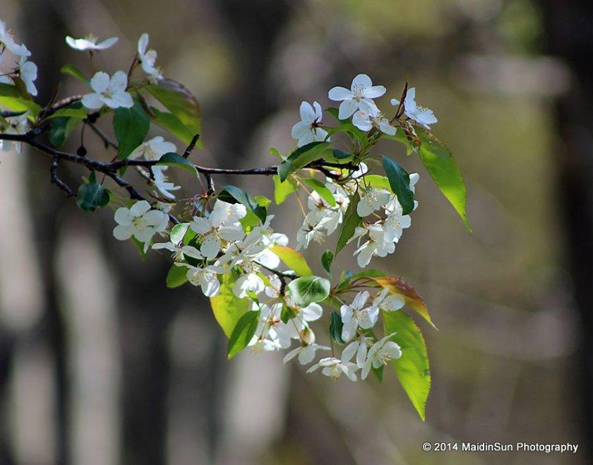 The fullness of spring