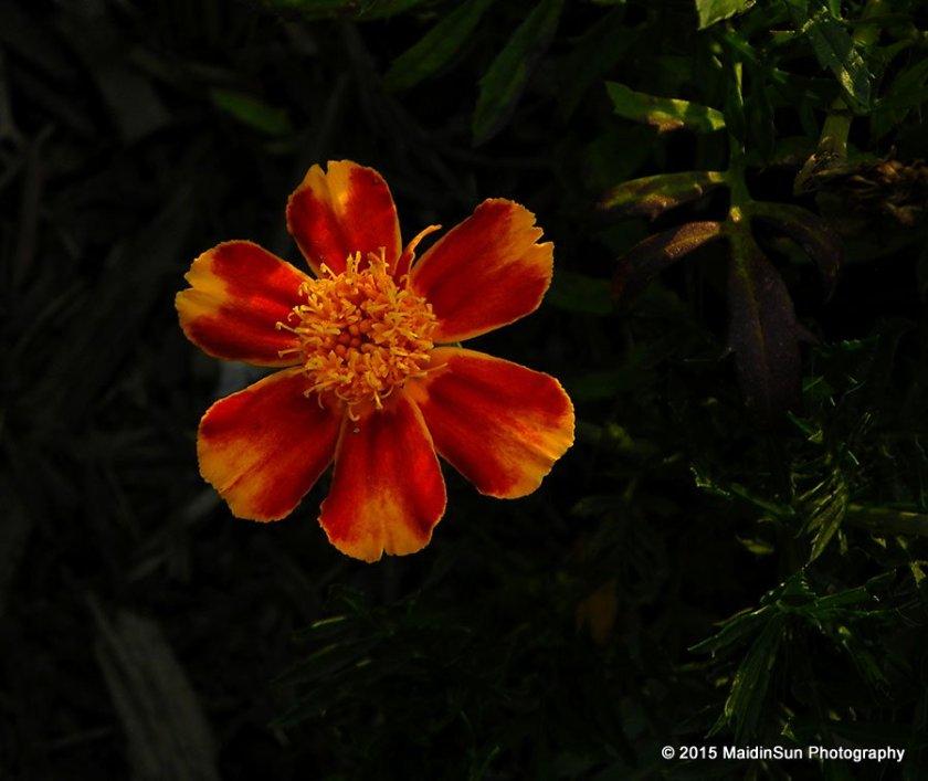 Orange delight.