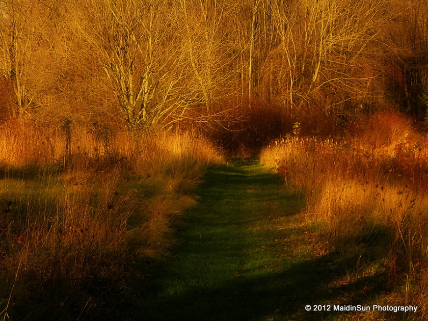 Through the upper meadow.