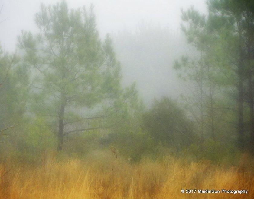 The softness of morning fog.